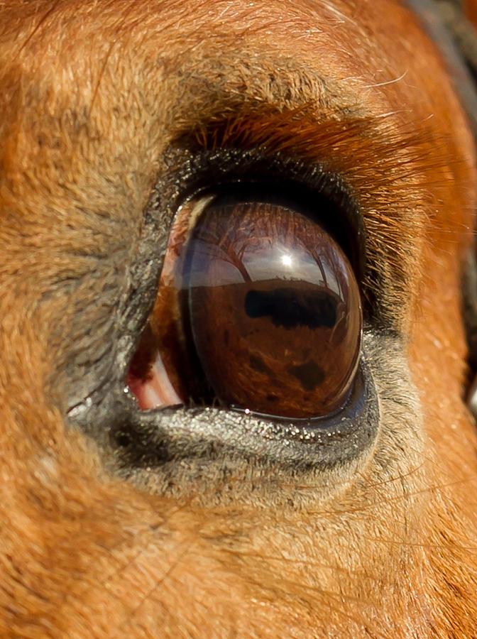 Horse Photograph - Eye by Paulina Szajek