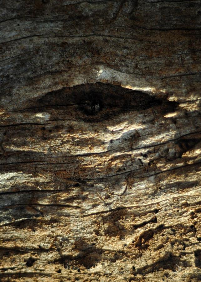 Eye by Rebecca Sherman