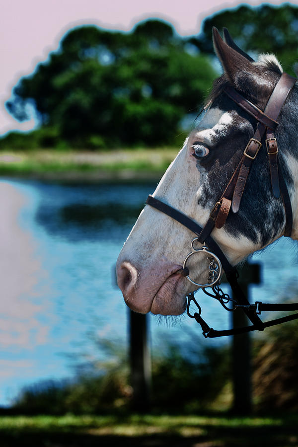 Horse Photograph - Eye See You by Frank Feliciano