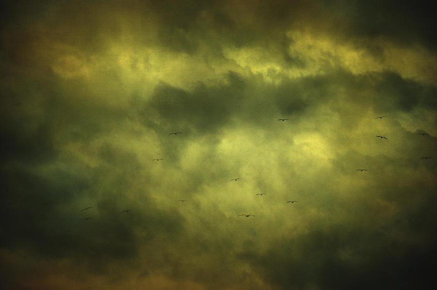 Birds Photograph - Eye Xix by Taylan Apukovska