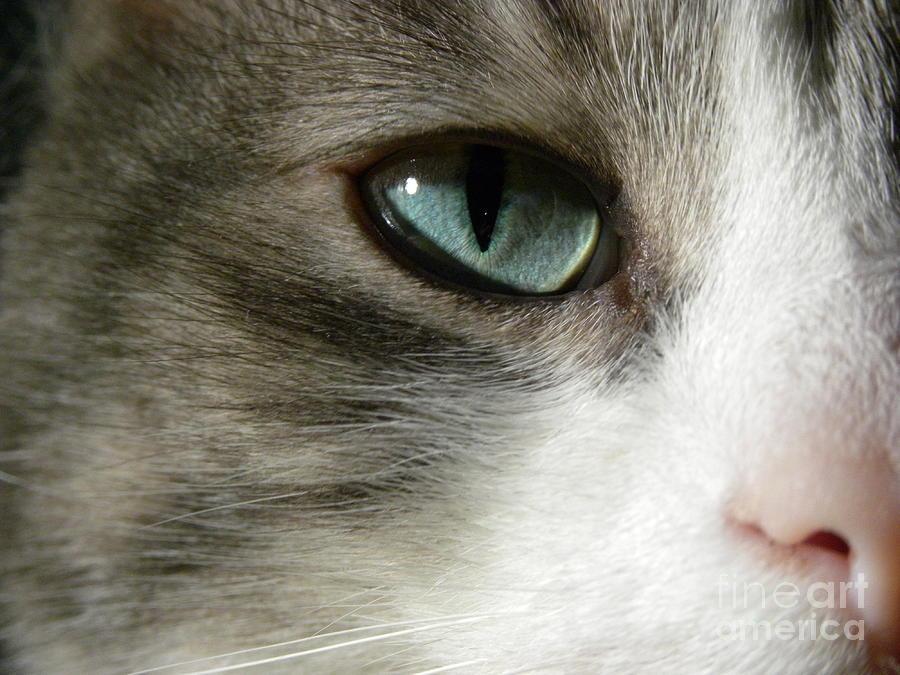 Cat Eye Photograph - Eyes 2 by Laura Yamada