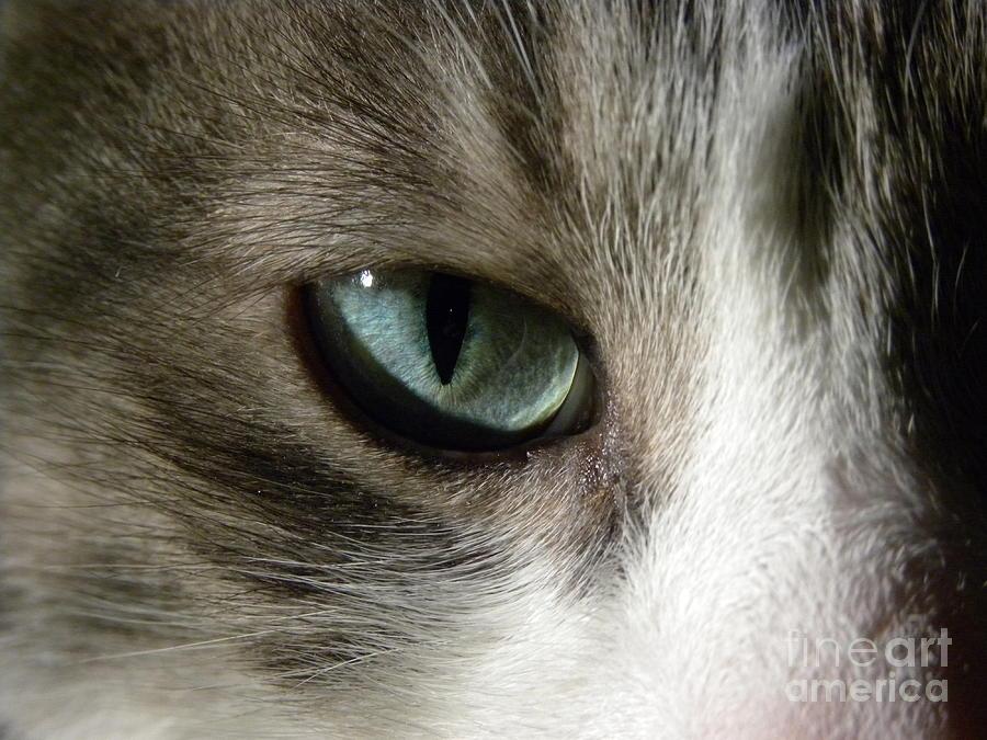 Cat Eye Photograph - Eyes 3 by Laura Yamada