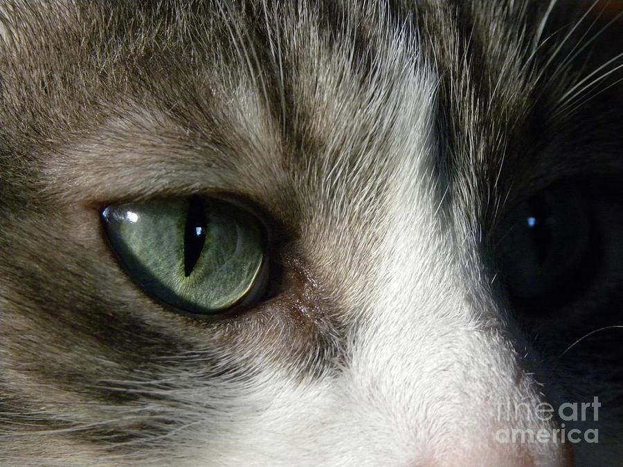 Cat Eye Photograph - Eyes 5 by Laura Yamada