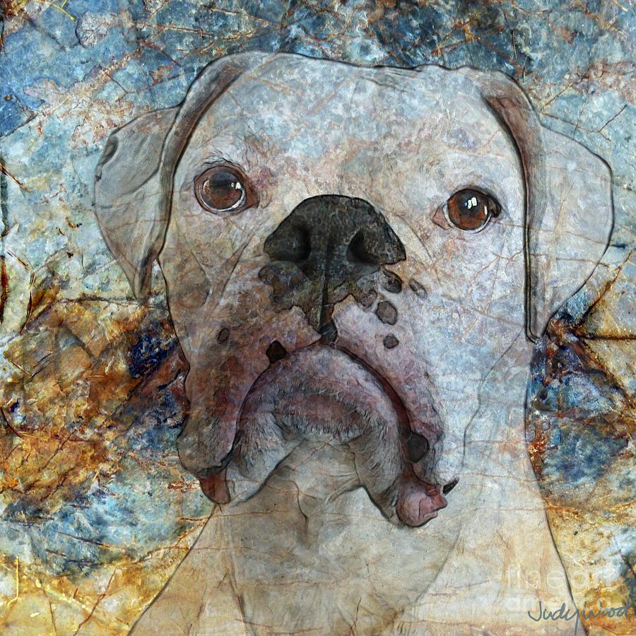 Dog Digital Art - Eyes Front by Judy Wood