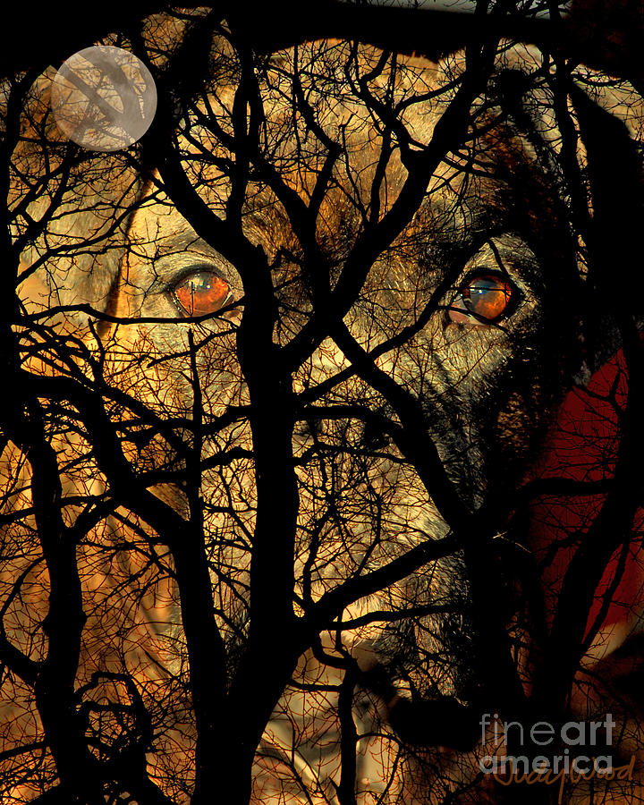 Dog Digital Art - Eyes In The Sky by Judy Wood