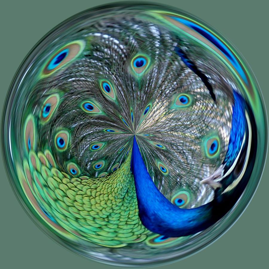 Eyes Photograph - Eyes Of A Peacock by Cynthia Guinn