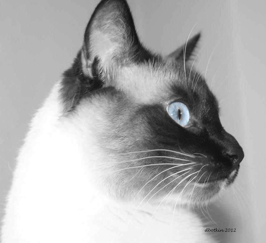 Animal Photograph - Eyes Of Blue by Dick Botkin