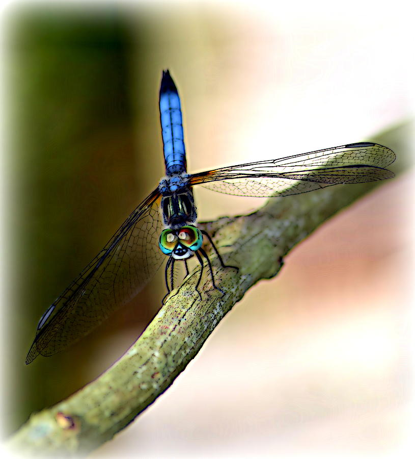 Dragonfly Photograph - Eyes On You Dragonfly by Sheri McLeroy