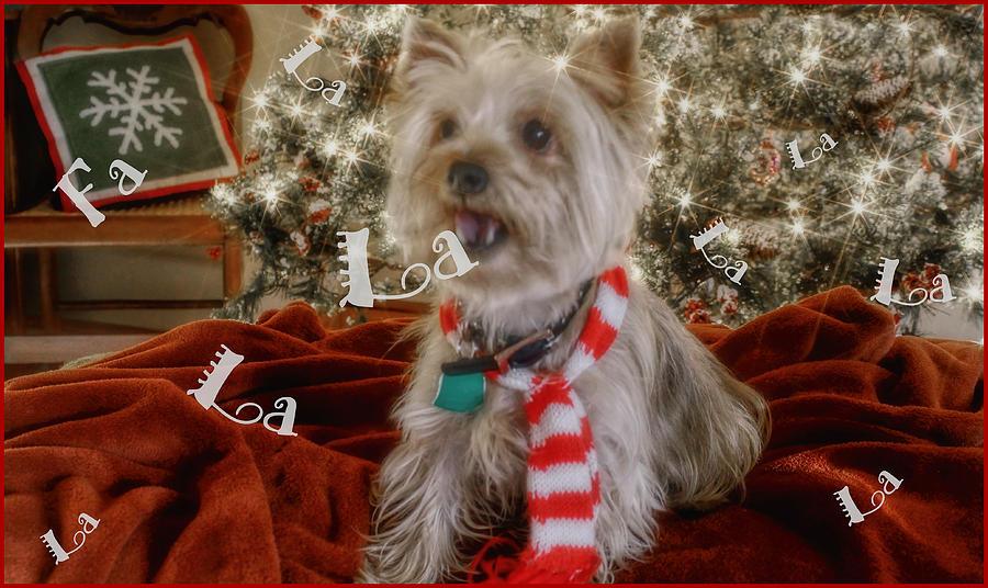 Christmas Photograph - Fa La La La La La La La La by Deb Buchanan
