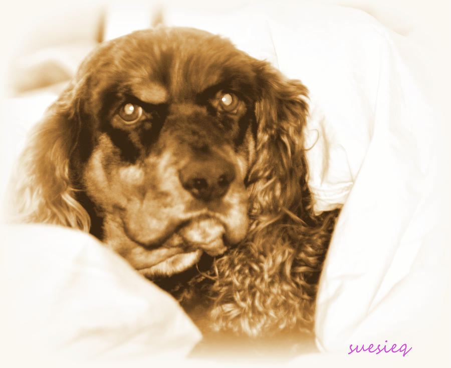 Dogs Photograph - Fabio by Sue Rosen
