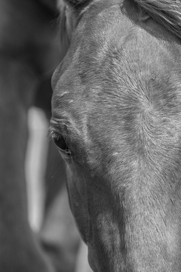 Horse Photograph - Face Me by Lezlie Faunce