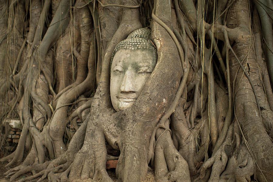 Face Of Ayutthaya Photograph by Nadia Casey Photo
