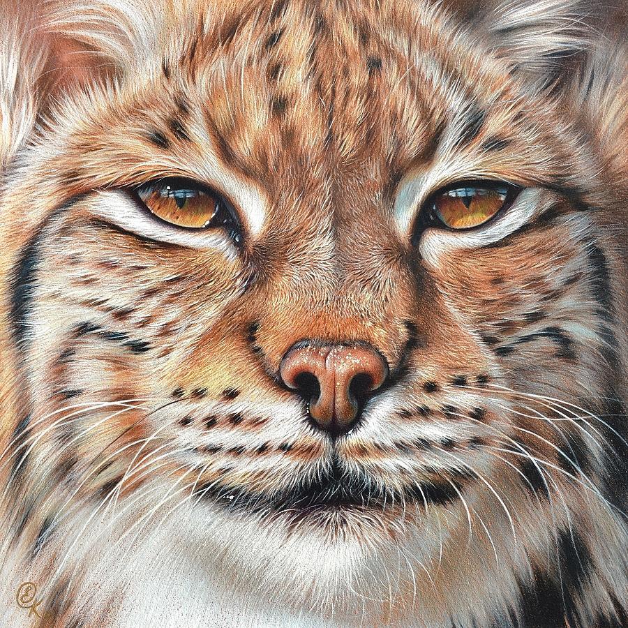 Faces Of The Wild Lynx Drawing By Elena Kolotusha