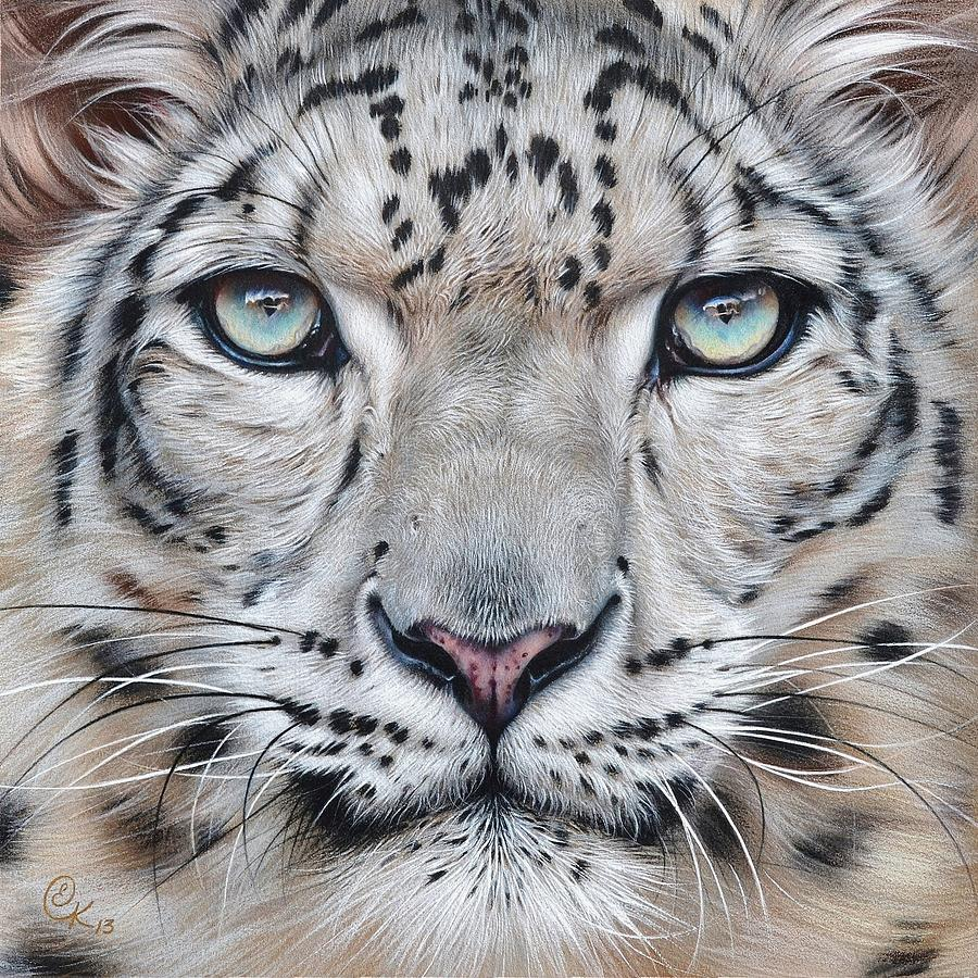 Animal Drawing - Faces Of The Wild - Snow Leopard by Elena Kolotusha
