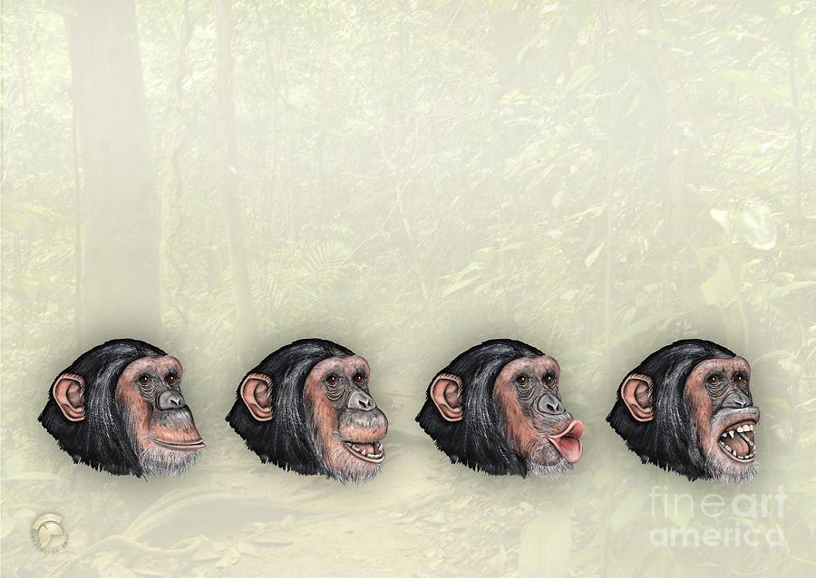 Facial Expressions Of Chimpanzees Pan Troglodytes - Zoo Interpretive Panel - Mimik Schimpansen Painting