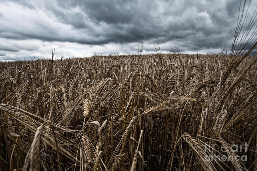 Field Photograph - Facing The Storm Color by John Farnan