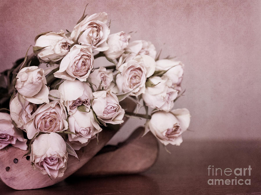 Rose Photograph - Fade Away by Priska Wettstein