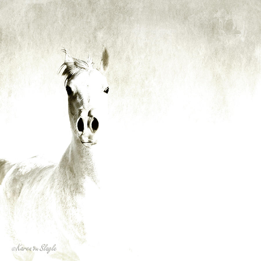 Photomanipulation Photograph - Fade To White by Karen Slagle