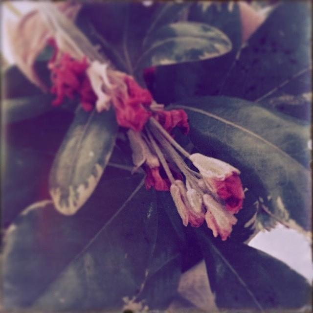 Wilted Photograph - #faded #floral #flower #wilted by Jan Pan