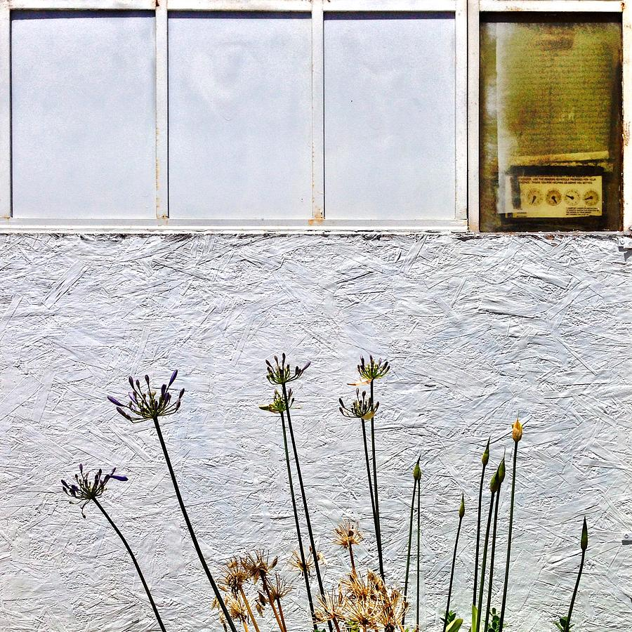 White Wall Photograph - Faded Flowers by Julie Gebhardt