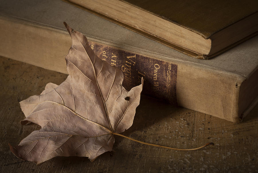 Book Photograph - Fading by Amy Weiss