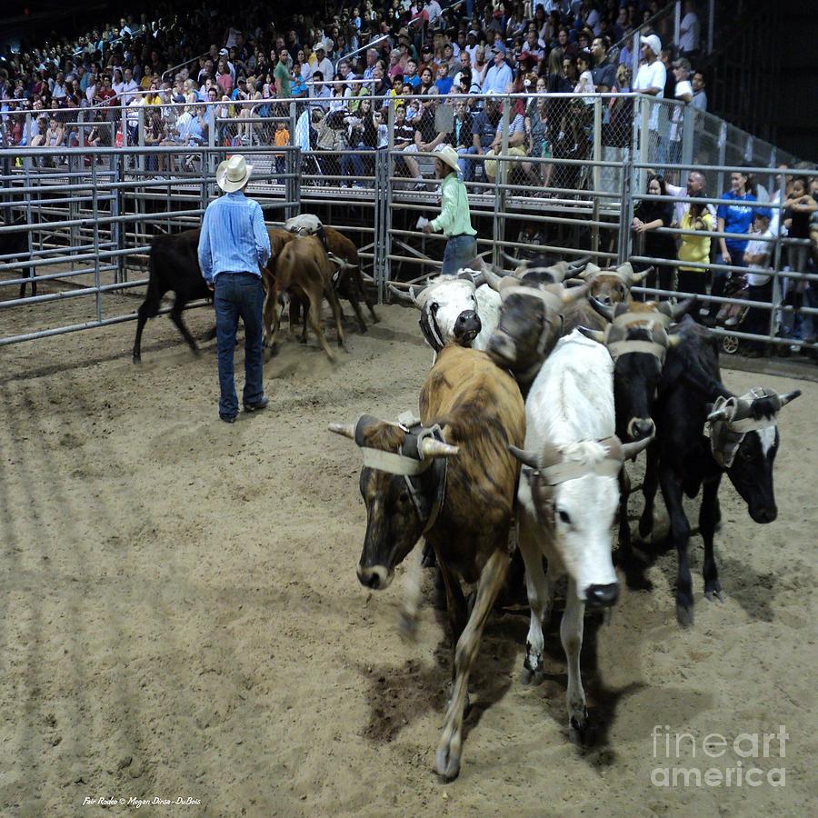 Animals Photograph - Fair Rodeo by Megan Dirsa-DuBois
