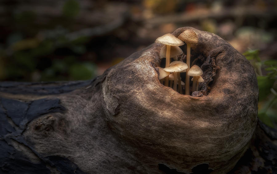 Mushroom Photograph - Fairie Garden by Scott Norris