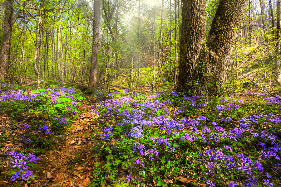 Appalachia Photograph - Fairies Forest by Debra and Dave Vanderlaan