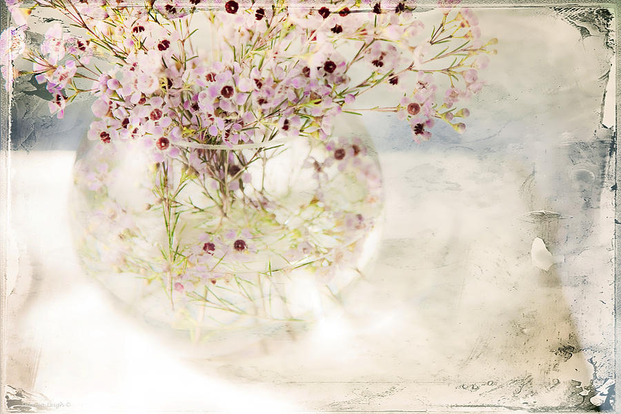 Bouquet Photograph - Fairy Bouquet by Theresa Tahara