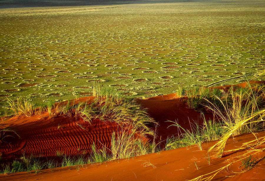 Fairy Circles Photograph by Gregory Daley  MPSA