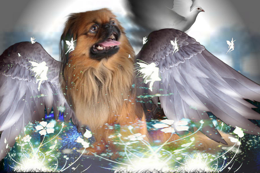Fairy Pup by Edward Cormier Jr