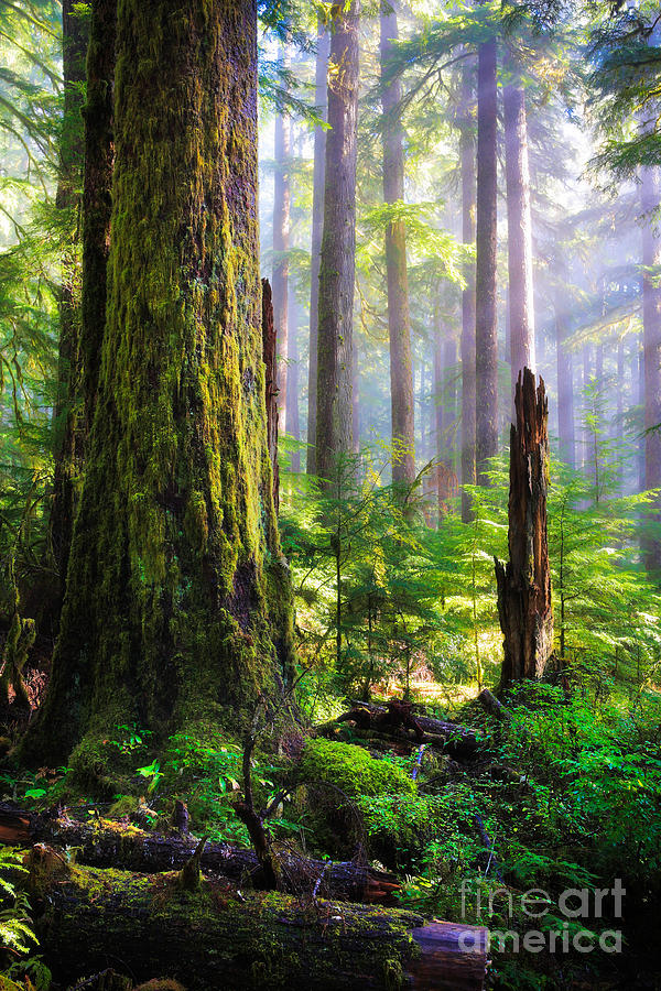 America Photograph - Fairy Tale Forest by Inge Johnsson