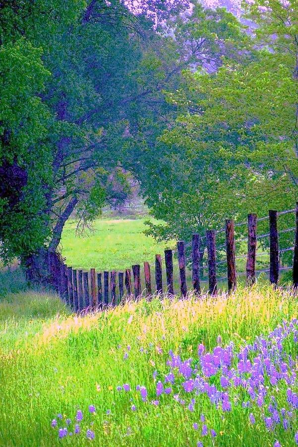 FAIRY TALE MEADOW WITH LUPINES by Pamela Smale Williams