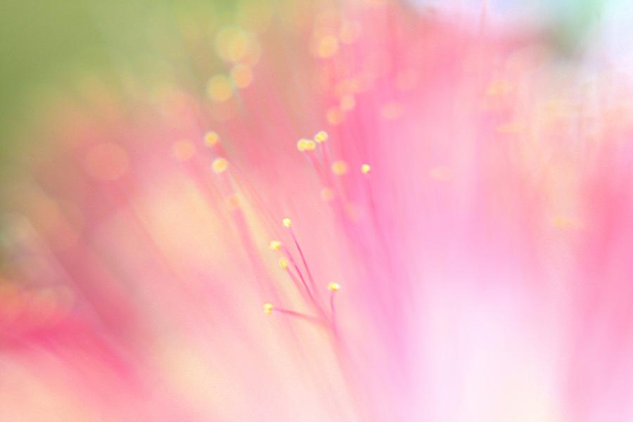 Pink Photograph - Fairyland by Leapdaybride
