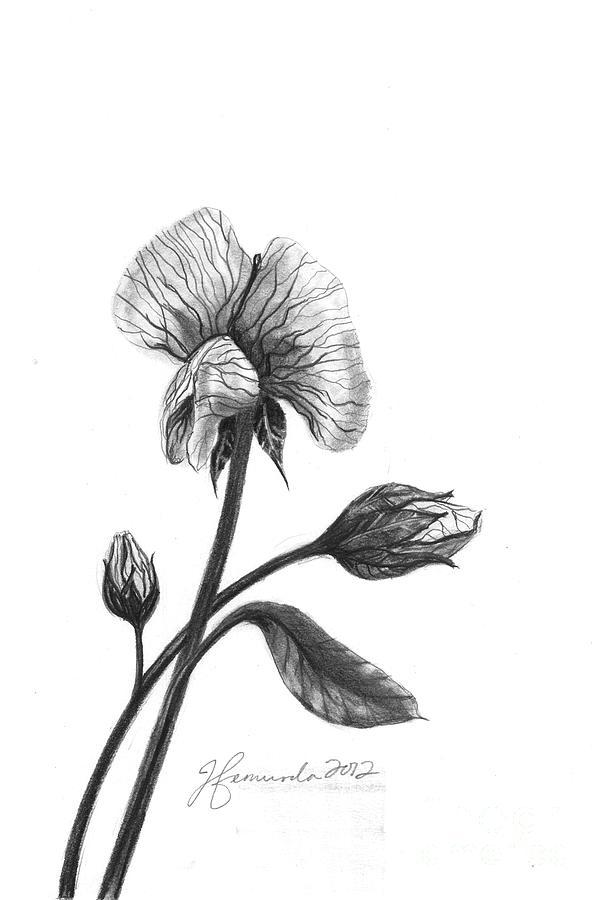 Flower Drawing - Faith Of A Flower by J Ferwerda