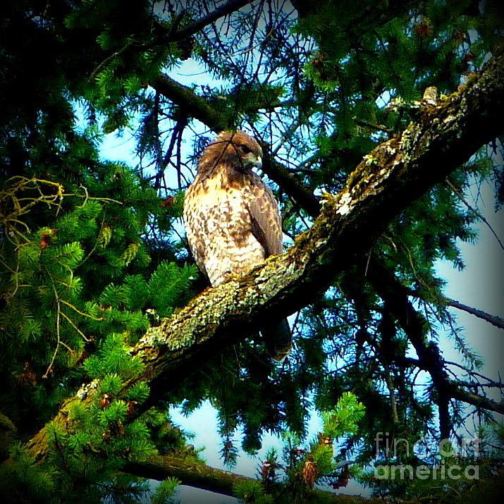 Falcon Photograph - Falcon High by Susan Garren