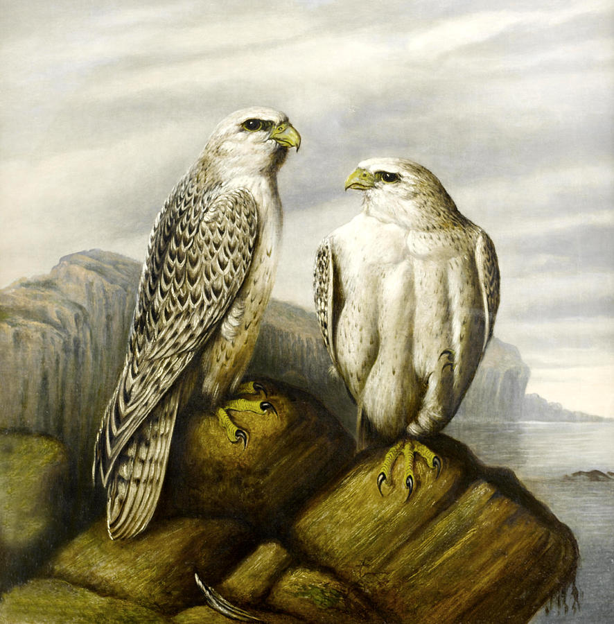 Falcons On A Rock Digital Art