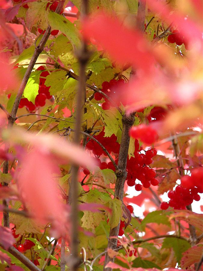 Fall 08-007 Photograph