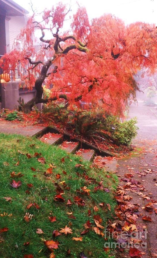 Fall Photograph - Fall And Fog by Suzanne McKay