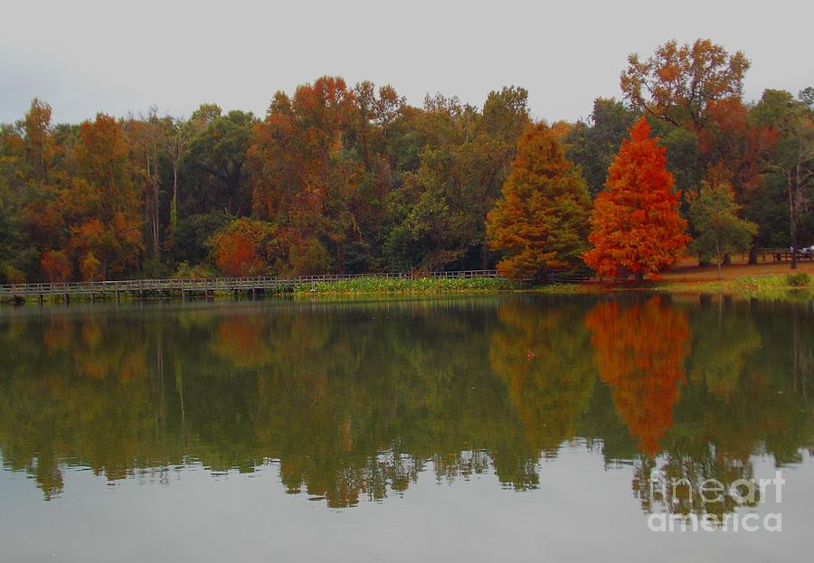 Park Photograph - Fall At Tom Brown Park by Annette Allman