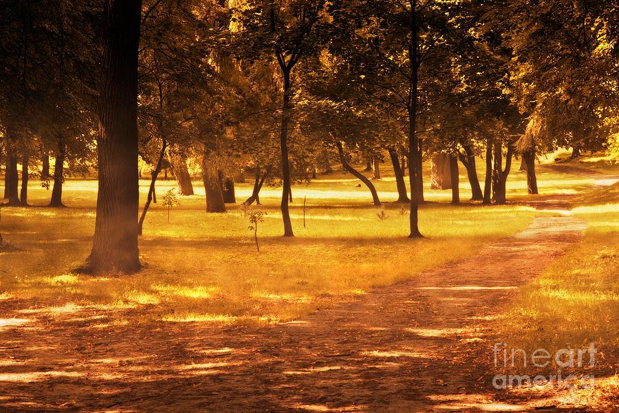 Fall Photograph - Fall Autumn Park by Michal Bednarek