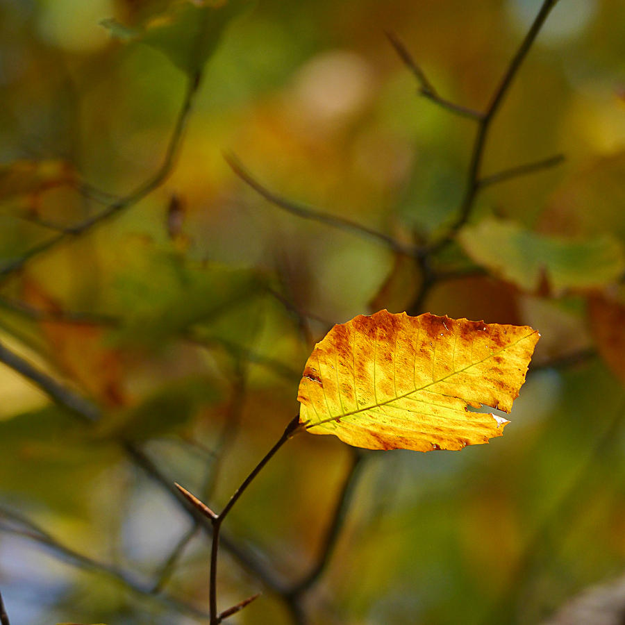 Fall - Backlit by Richard Reeve