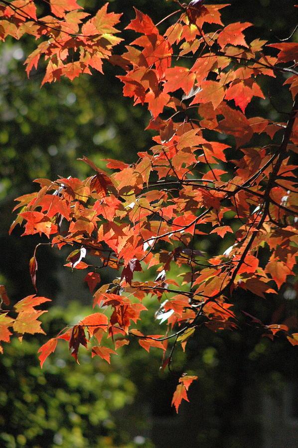 Fall Colors Photograph - Autumns Best by Les Scarborough