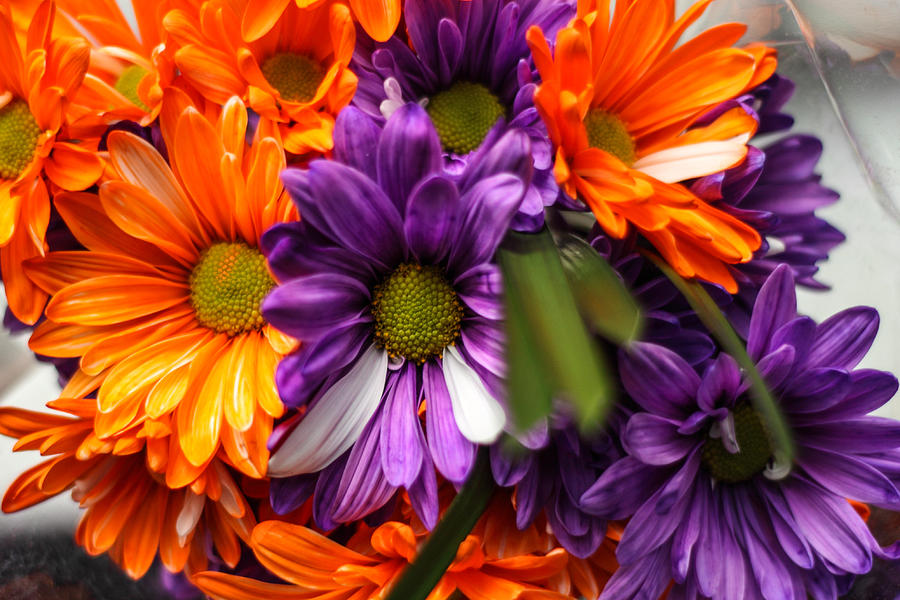Flowers Photograph - Fall Bloom by Brandon Hussey