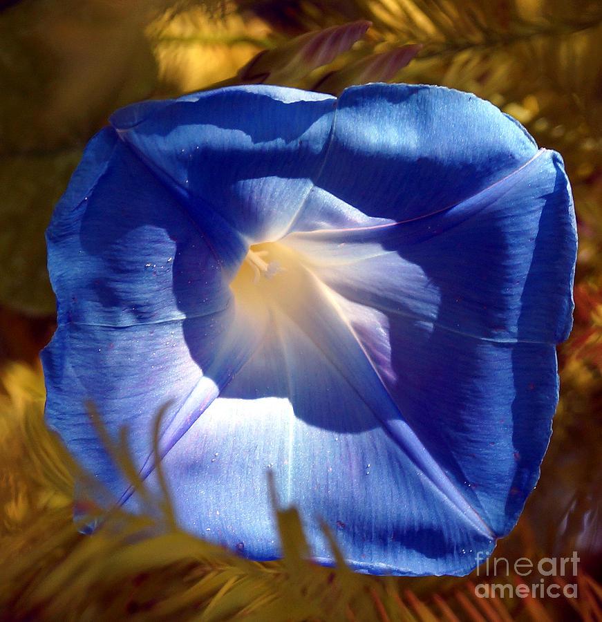 Morning Glory Digital Art - Fall Blues by Kim Pate