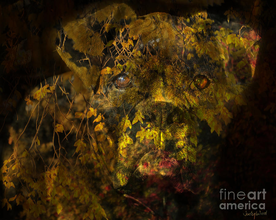 Boxer Dog Digital Art - Fall Boxer by Judy Wood