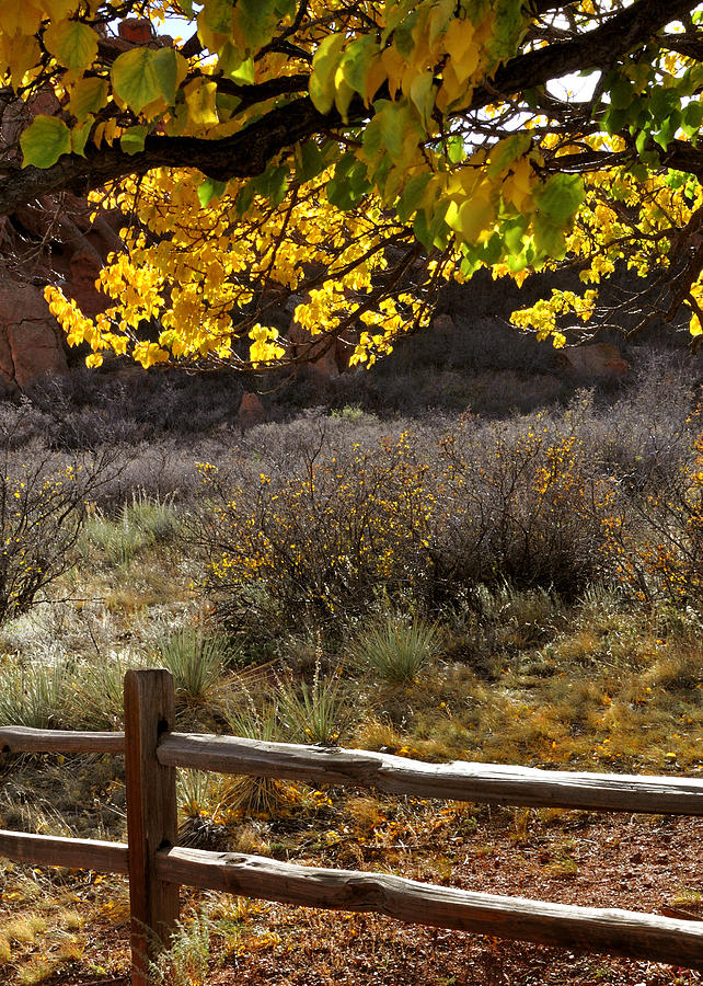 Fall Canopy And Fence 12476 Photograph
