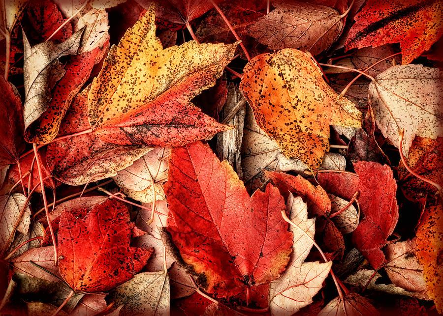 Fall Photograph - Fall Carpet by Carolyn Derstine