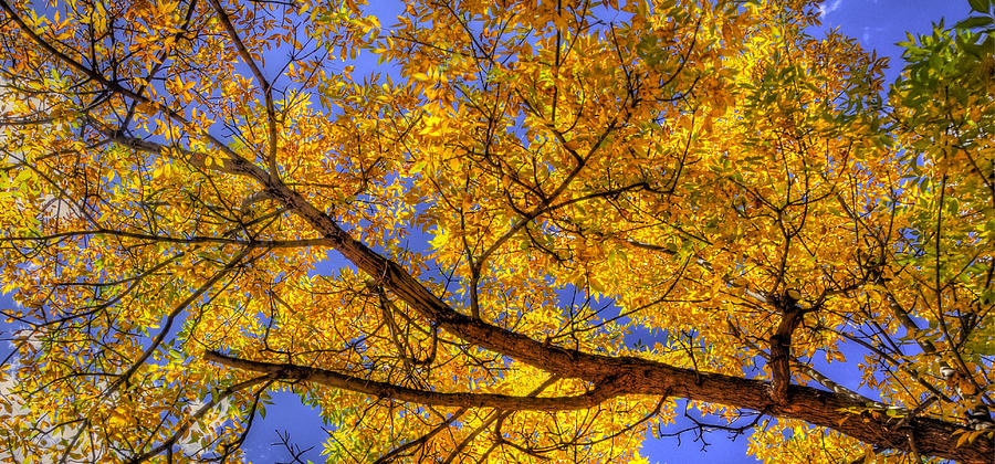 Fall Color Canopy 12161 Photograph