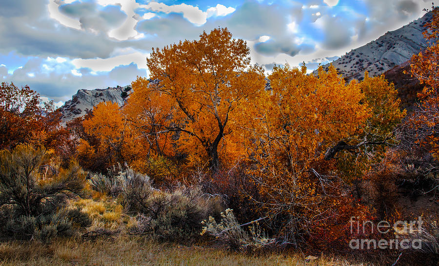 Fall Color In The High Desert Photograph By Robert Bales